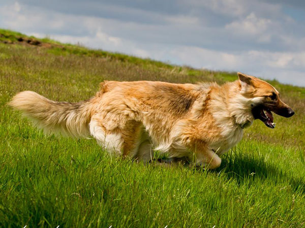 gsd running like the wind